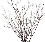Tin Roof Treasure Small Natural Birch Branches 1-2 ft. Pack of 30