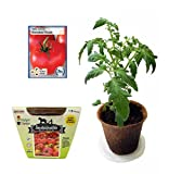 Tomato All-in-One Growing Kit, Non GMO Heirloom Tomato Seeds (Homestead)