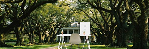 Oak trees in front of a mansion, Oak Alley Plantation, Vacherie, Louisiana, USA on Smooth Peel & Stick Decal Wallpaper by CustomWallpaper.com