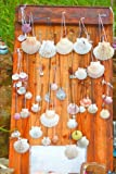 Scallop Shells (Viera) in Galicia Spain Camino De Santiago Journal: 150 Page Lined Notebook/Diary