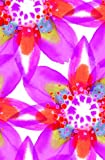 Arts & Crafts : The Gift Wrap Company Gift Enclosure Cards with Orange Envelopes, 4 Per Pack, Kaleidoscope Floral