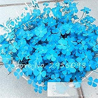Fash Lady Große Förderung 100 Teile/Beutel Blau Klee Samen Bonsai Blumensamen Hausgarten Vier Blatt Liebhaber Grassamen Büro Schreibtisch Planta Generic