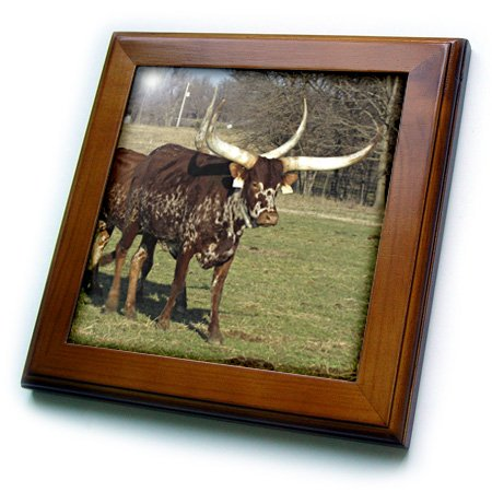 Jackie Popp animals - Texas Long Horn Cows - 8x8 Framed Tile (ft_195180_1)