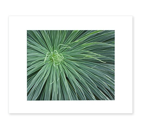 Abstract Green Botanical Wall Art, Southwestern Home Decor, 8x10 Matted Photographic Print (fits 11x14 frame), 'Desert Fireworks' by Offley Green