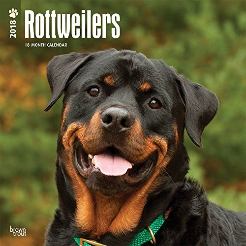 Rottweilers 2018 Wall Calendar Photo #1