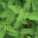 Burpee Lime Basil Seeds 600 seeds