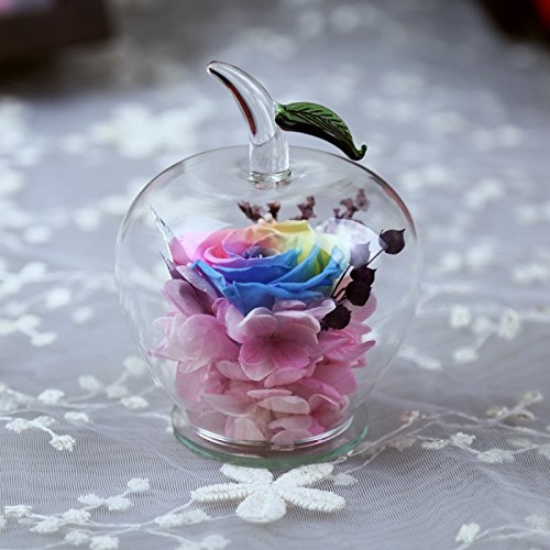 DeFancy Handmade Preserved Flowers Rose Decor with Apple-shaped Glass-Best Gift for Valentine's Day,Mother's Day,Birthday (Rainbow)
