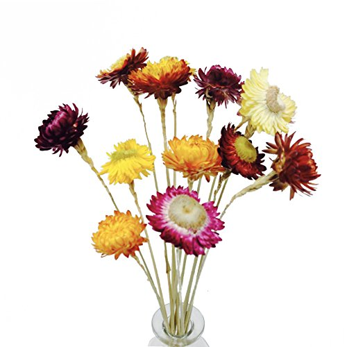 Dried Flower Bunches - TooGet Fragrant Golden Everlasting Dried Strawflower Bunches 30 Stems(16