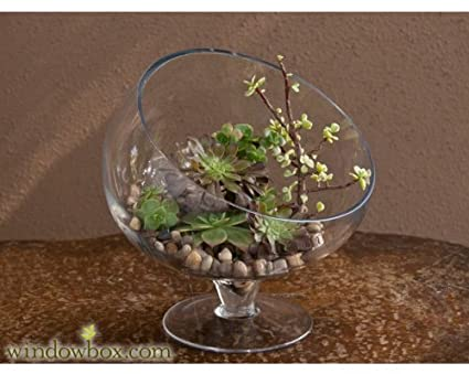 Amazon Com Large Glass Slanted Bias Terrarium Bowl Home Kitchen