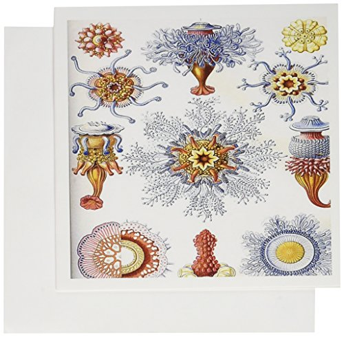 3drose-greeting-cards-6-x-6-inches-pack-of-6-famous-biologist-sea-life-sketch-late-1800s-gc-62143-1