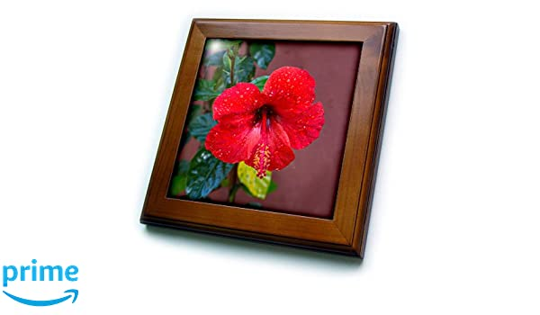 3dRose Hibiscus Flower on Red Coaster Set of 8 Soft