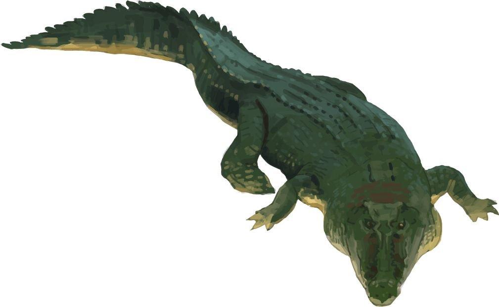Crocodile Animal Home Decal Vinyl Sticker 14'' X 8''