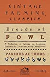 Breeds of Fowl - A Collection of Articles on Leghorns, Bantams, the Cochin and Many Other Breeds by Various (2011-02-08)