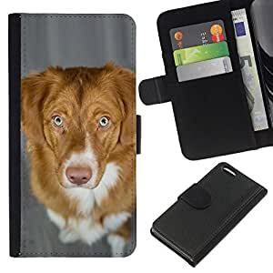 All Phone Most Case / Oferta Especial Cáscara Funda de cuero Monedero Cubierta de proteccion Caso / Wallet Case for Apple Iphone 5C // Nova Scotia Duck Tolling Retriever Dog