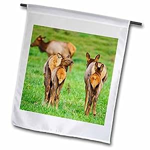 Danita Delimont - Elk - Elk wildlife, Ozark Mountains near Boxley, Arkansas - US03 LDI0000 - Larry Ditto - 12 x 18 inch Garden Flag (fl_88015_1)
