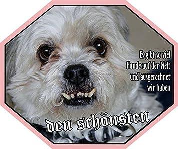 Petsigns Aufkleber Hund Lustig Shih Tzu Uv Bestandig Wetterfest