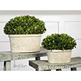 Uttermost Oval Domes Preserved Boxwood (Set of 2) Flower Pot / Planter .by_homesquarecom it#312191914461136