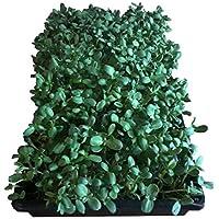 FARMERLY Las Semillas orgánicas: 7 Libras de Semillas microgreens Organicly Grown - 21 Pre-Medido Bolsas