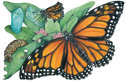 Metamorphosis of a Butterfly Floor Puzzle