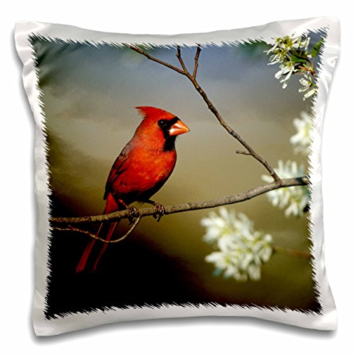 3dRose Danita Delimont - Cardinal - Northern Cardinal male on Flowering Serviceberry tree, Illinois - 16x16 inch Pillow Case (pc_250949_1)