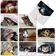 Cat You See Me Now?: 10 Assorted Blank All-Occasion Note Cards Feature Images of Cats and Kittens Hiding, w/White Envelopes. M1543BN