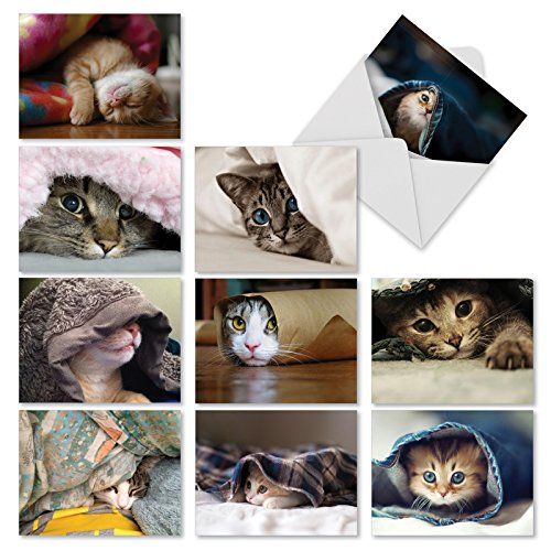Folding Note (M1543BN Cat You See Me Now?: 10 Assorted Blank All-Occasion Note Cards Feature Images of Cats and Kittens Hiding, w/White Envelopes.)