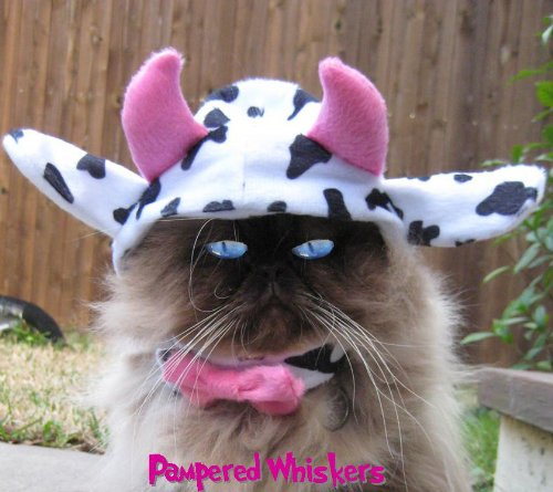 Pampered Whiskers Mad Cow costume for dogs and cats (x-small (6-10