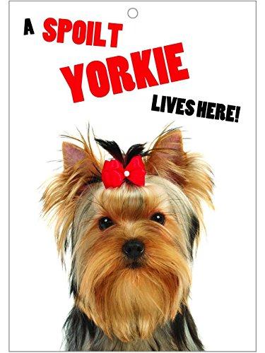 Yorkie - Fun sign - Türschild
