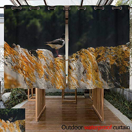 WinfreyDecor Outdoor Curtain for Patio Oystercatcher (Haematopus Ostralegus) Jersey W96 x L72
