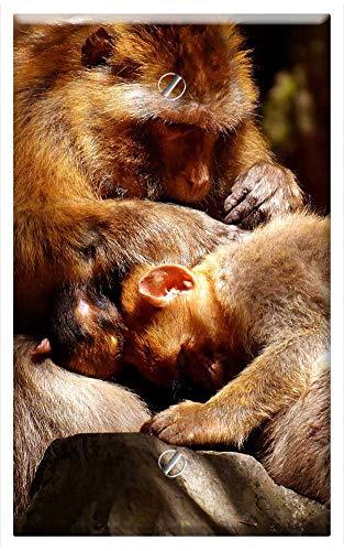 Single-Gang Blank Wall Plate Cover - Ape Baby Monkey Loving Delouse Barbary Ape
