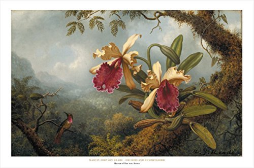 Buyartforless Orchids and Hummingbirds by Martin Johnson Heade 24x36 Art Print Poster Famous Painting Yellow Pink Flowers Foggy Tropical - Print Art Pink Yellow