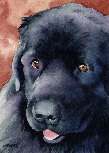 - Newfoundland Dog Art Print by Artist DJ Rogers