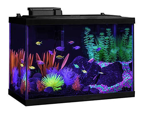 tetra glofish 20 gallon aquarium kit review glofish tank