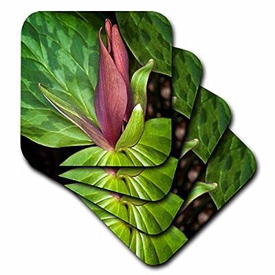3dRose Danita Delimont - Flowers - Toadshade Trillium, Trillium sessile Kentucky - Coasters