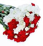 Farm2Door Wholesale Flower Combo Box: 25 White Carnations, 25 Red Carnations, 20 White Mini carnations, 20 Red Mini carnations - Farm Direct Wholesale Fresh Flowers