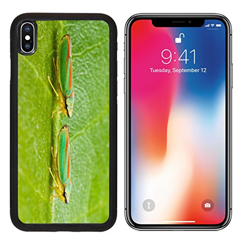 MSD Premium Apple iPhone X Aluminum Backplate Bumper Snap Case Two rhododendron leaf hoppers Are believed to spread rhododendron fungus IMAGE 19820486 - Aluminum Hopper