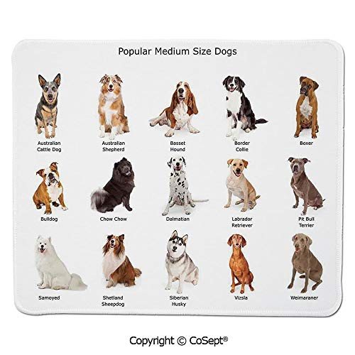 Mouse Pad,A Group of Different Puppy Breeds Family Type Species Dalmatian Husky Bulldog Image Print,for Computer,Laptop,Home,Office & Travel(11.81