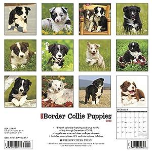 Just Border Collie Puppies 2020 Wall Calendar (Dog Breed Calendar) 29