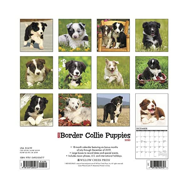 Just Border Collie Puppies 2020 Wall Calendar (Dog Breed Calendar) 1