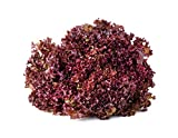 Salad Bowl Red Leaf Lettuce Seeds, 1000+ Premium Heirloom Seeds, Delicious! Add Color to Your Salad!, (Isla's Garden Seeds) 90% Germination Rates, Non GMO Organic, Highest Quality!