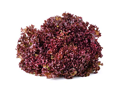 Salad Bowl Red Leaf Lettuce Seeds, 1000+ Premium Heirloom Seeds, Delicious! Add Color to Your Salad!, (Isla's Garden Seeds) 90% Germination Rates, Non GMO Organic, Highest ()