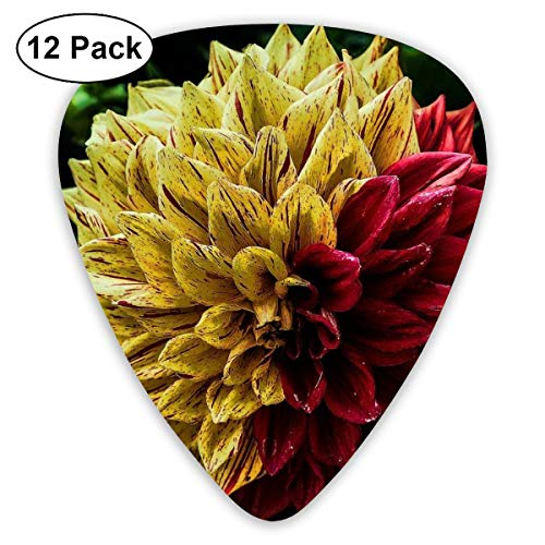 V5DGFJH.B Red and Yellow Mexican Dahlia Classic Guitar Pick Player's Pack for Electric Guitar,Acoustic Guitar,Mandolin,Guitar Bass]()