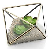 Diamond Shape Glass Prism Terrarium with Brass Rim / Air Plant Display Case / Tea Light Candle Holder