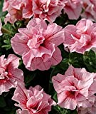 DOUBLE Madness SUMMER ~ PETUNIA ~ 25 Pelleted SEEDS