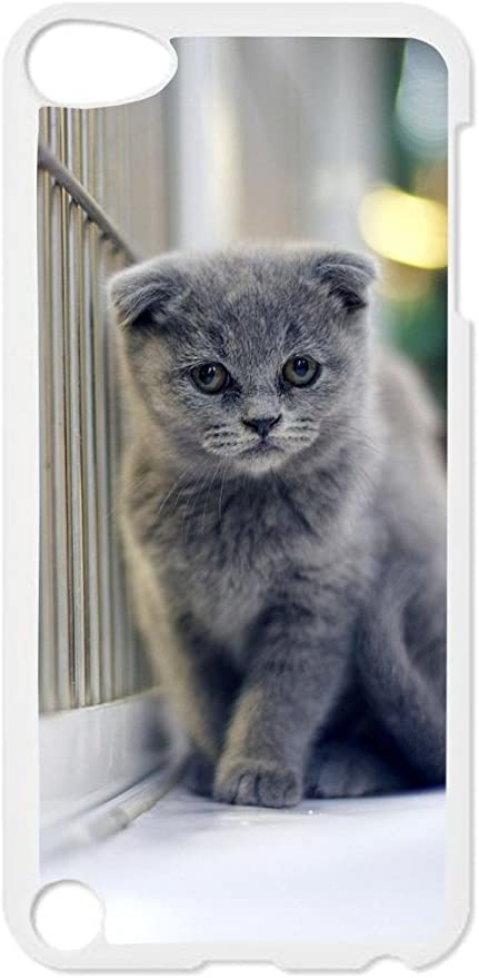 Amazon Com Grey Persian Cat Kitten White Plastic Snap On Case For The Apple Ipod Itouch 4th Generation Mp3 Players Accessories