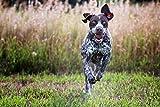Purina-Pro-Plan-Sport-Performance-3020-Formula-Dry-Dog-Food