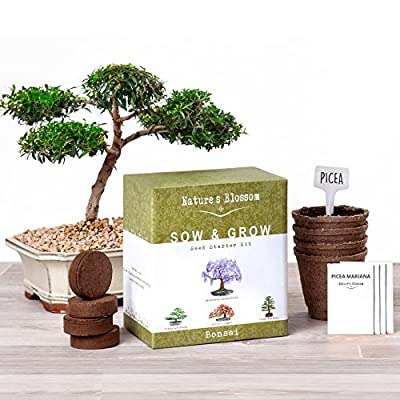Natures's Blossom Sow and Grow 4 Bonsai Trees Germination Kit. Complete Seed Starter Kit for Indoors or Outdoors