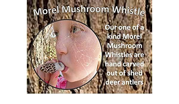 Swell Amazon Com Fantastic Realistic Morel Mushroom Whistle Hand Download Free Architecture Designs Barepgrimeyleaguecom