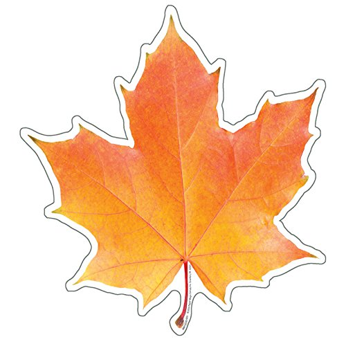 Eureka Photo Image of A Fall Leaf, 5