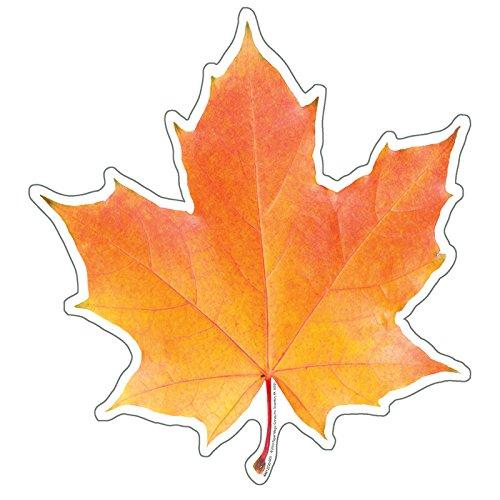 Outs Leaves Fall Cut - Eureka Photo Image of A Fall Leaf, 5